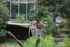 Tiergarten.Muenchen.Aug_.2014-110