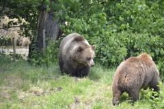 Wildpark.Poing_.Juni20-059