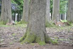 Wildpark.Poing_.Juni20-093