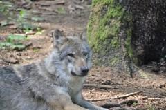 Wildpark.Poing_.Juni20-105