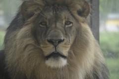 Zoo Augsburg 2017
