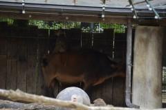 Zoo.Augsburg.28.07.17-002