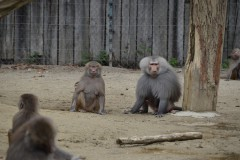 Zoo.Augsburg.28.07.17-003