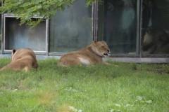 Zoo.Augsburg.28.07.17-005