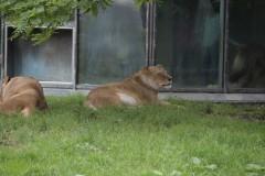 Zoo.Augsburg.28.07.17-006