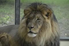 Zoo.Augsburg.28.07.17-013