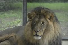 Zoo.Augsburg.28.07.17-015