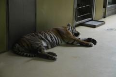 Zoo.Augsburg.28.07.17-021