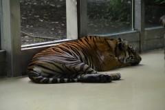 Zoo.Augsburg.28.07.17-022