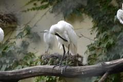 Zoo.Augsburg.28.07.17-024