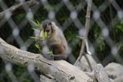 Zoo.Augsburg.28.07.17-043