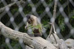 Zoo.Augsburg.28.07.17-044