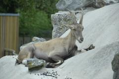 Zoo.Augsburg.28.07.17-049