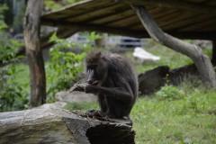 Zoo.Augsburg.28.07.17-052