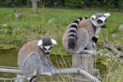 Zoo.Augsburg.28.07.17-063