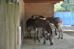 Zoo.Augsburg.28.07.17-080