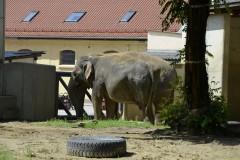 Zoo.Augsburg.28.07.17-082
