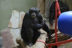 Zoo.Augsburg.28.07.17-084