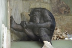 Zoo.Augsburg.28.07.17-087