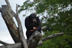 Zoo.Augsburg.28.07.17-093