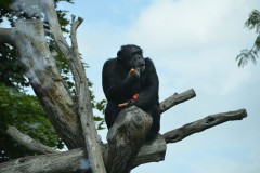 Zoo.Augsburg.28.07.17-095