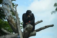 Zoo.Augsburg.28.07.17-096