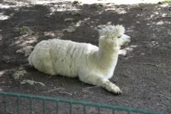 Zoo.Augsburg.28.07.17-100